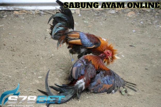 Situs Agen Adu Ayam S128 Termurah Di Indonesia